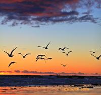 Winter Sunset Photography