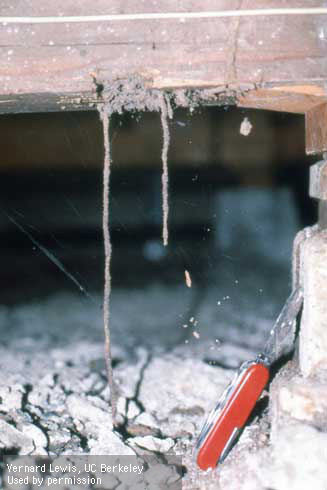 Drop Tubes from Termites? Quick FAQs for Bakersfield Residents
