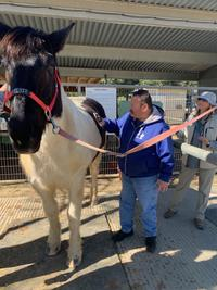 man with blue jacket standing with a black and white horse for horse therapy