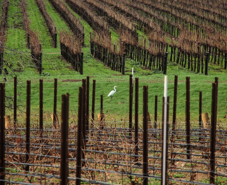 Estate Wine Tours Next Adventure 805 Santa Barbara-18B