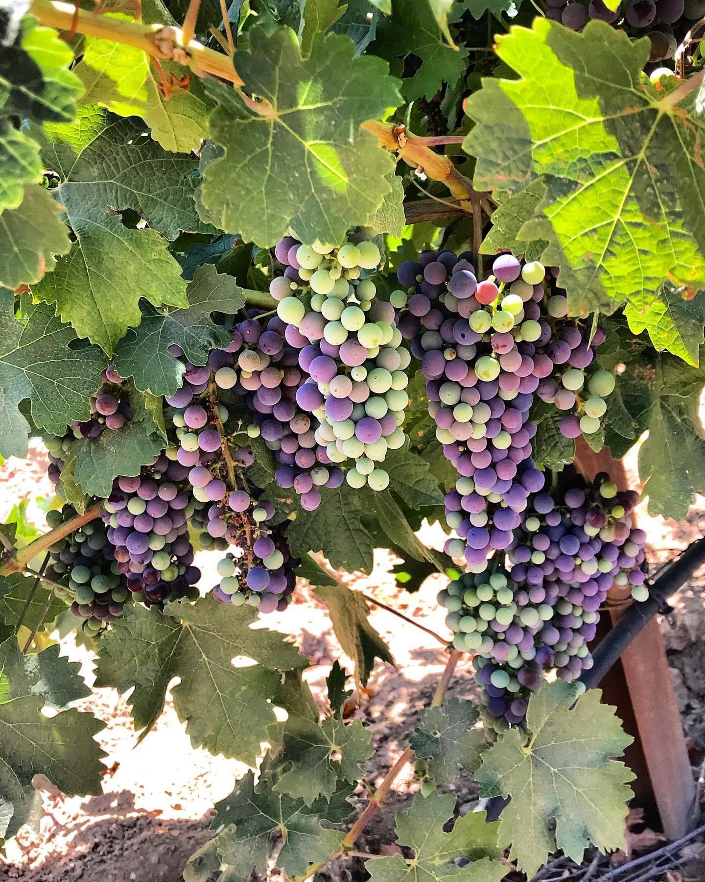 Estate Wine Tours Next Adventure 805 Santa Barbara-36