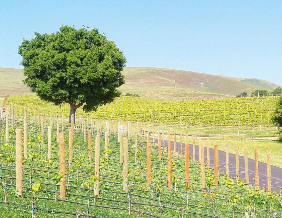 Estate Wine Tours Next Adventure 805 Santa Barbara-37