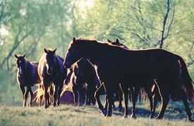 King Ranch Kingsville-2