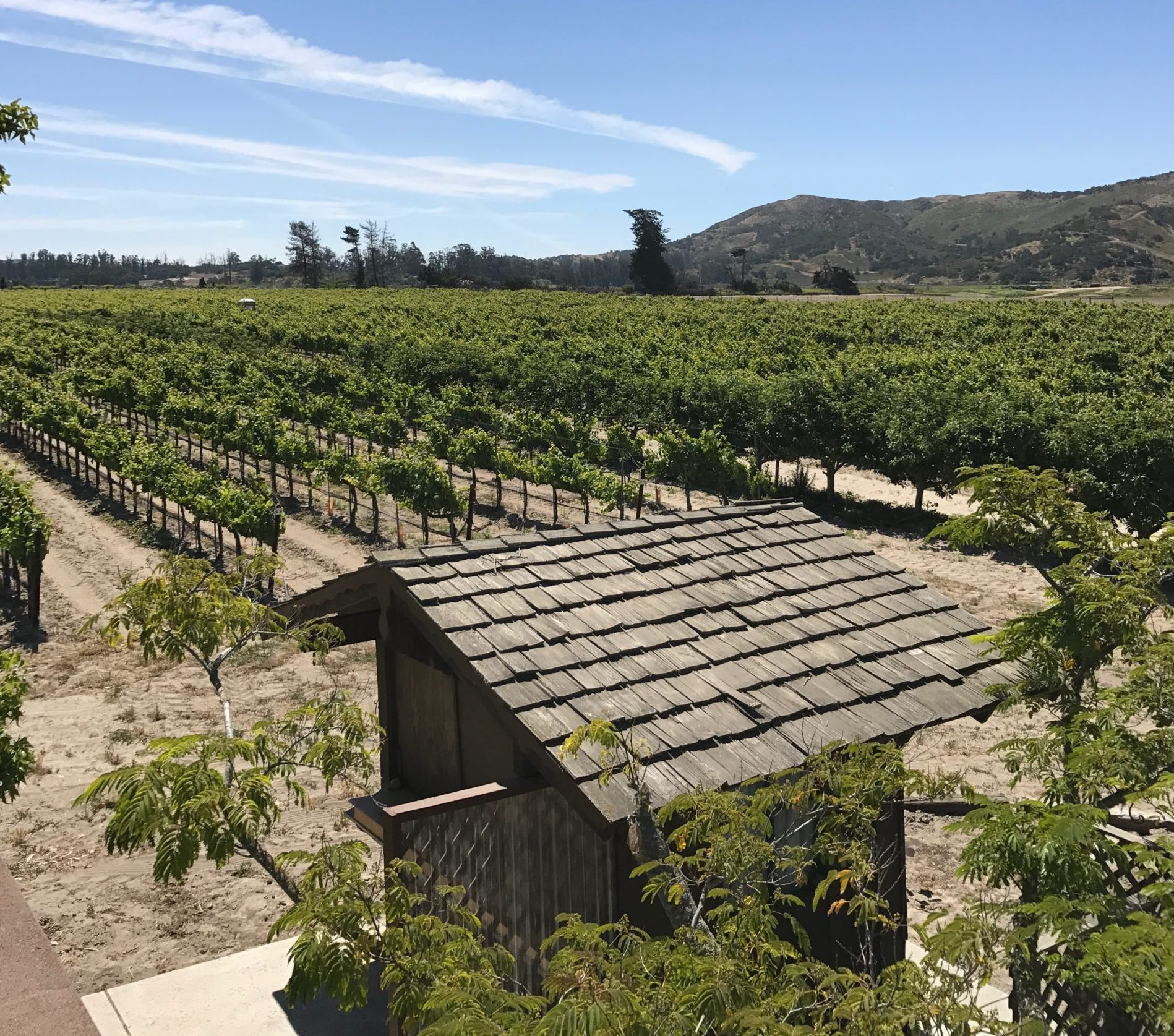 2018 Pinot Noir Chapel Vineyard