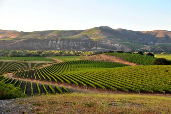 2018 Aloysius Chardonnay - Sta. Rita Hills