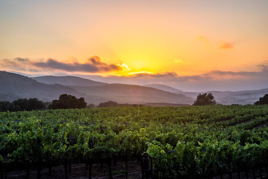 2018 Pinot Noir La Encantada Vineyard
