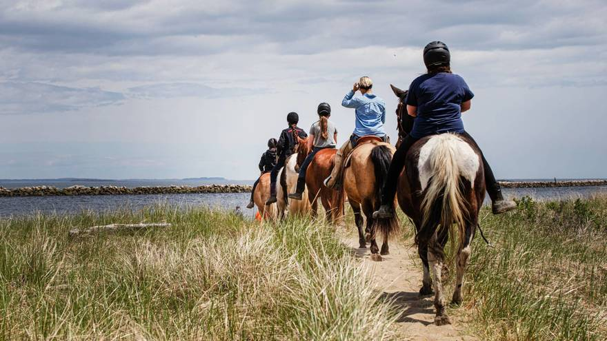 Beach or Coastal Horseback Riding Tours