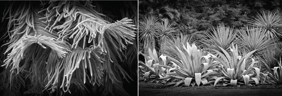 Santa Barbara Art - Stephen Robeck Lotusland Gallery