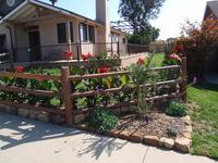 split rail fencing buffalograss ornamental plantings