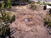 Greywater laundry to landscape mulched basin