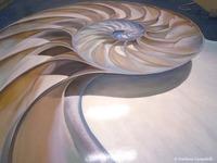 Trompe L'oeil nautilus floor painting