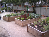 childrens school food veggie garden raised beds boxes
