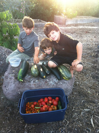 HFF Kea C harvest