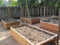 home food forest raised redwood garden vegetable boxes beds veggies