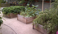 raised veggy vegetable food garden boxes redwood