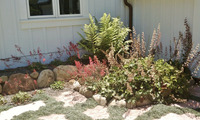 CA appropriate Mediterranean native plantings