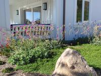 callindrinia cistanthe jazz time and myoporum parvifolium pink groundcover drought tolerant plantings