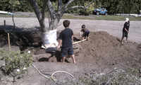 client's children helping backfill olive tree planting