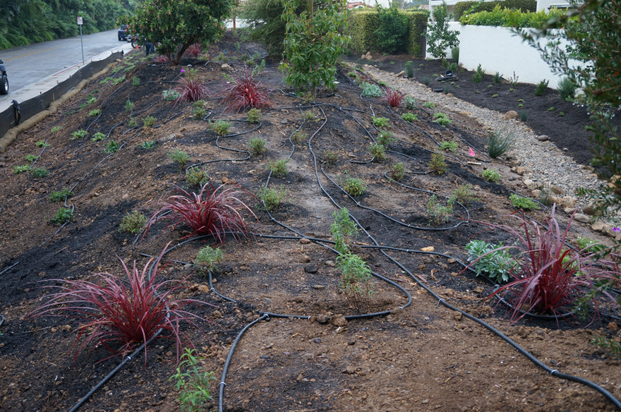 drought tolerant plantings drip tubing irrigation hydrozones installation