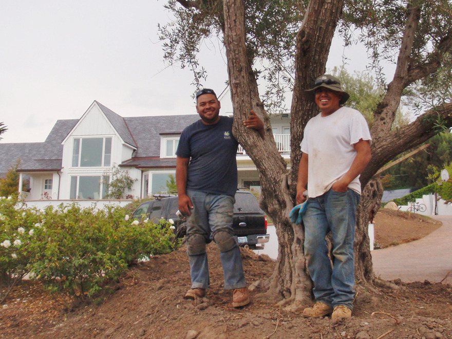 happy employees juan and tony after planting olive tree
