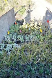 native plants before installation habitat restoration