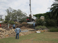planting with cranes large olive trees and terrace stonework