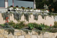 terrace drought tolerant plantings