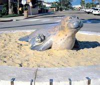Seals at the Carpinteria Beach
