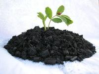 Biomass Char