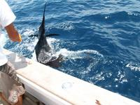 Costa Rica Fishing Charter