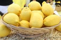 2013 Lemon Festival