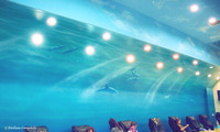 Spa Dolphin Mural 2