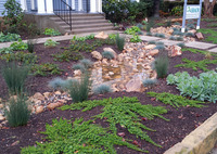 SBAOR raingarden during rain event- full