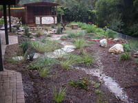 Bioswale Rainwater