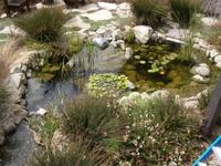 Pond Aquatic Life Water Garden