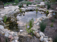 Aquatic Native Plant Pond