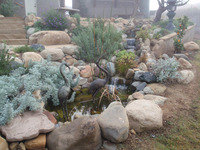 Stream and Pond System