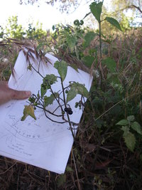 Native Plant Survey