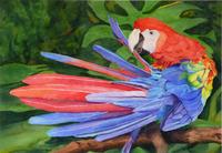 Scarlet Vanity Watercolor 19x13