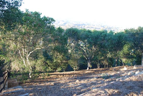 Oak Tree Grove on Property