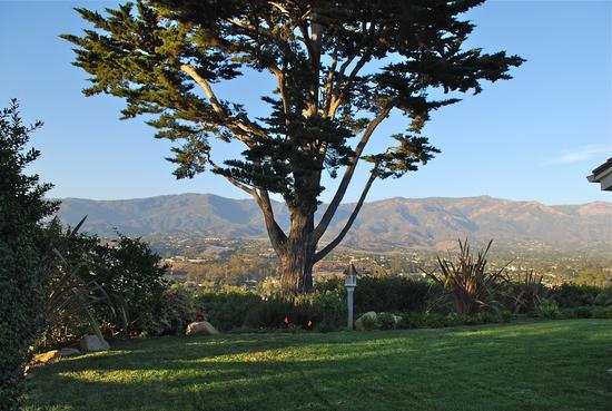 Backyard and Cypress Tree