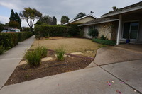 Before: front yard lawn
