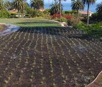 Irrigation -9