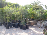 Trees to be Planted