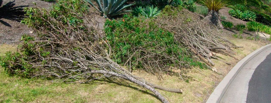 Brush Clearing, Is Your Home Defendable?
