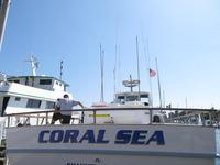 The Coral Sea-4