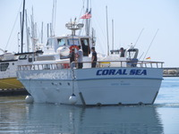 The Coral Sea-10