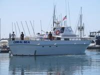 The Coral Sea-11