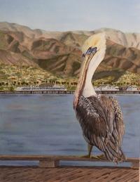 Pelican Daydream, 14 X 17, watercolor SOLD