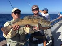 10.21.15 Limits of Lingcod Channel Islands-15
